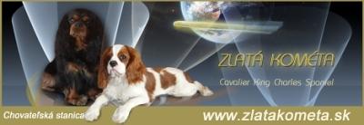 banner_zlata